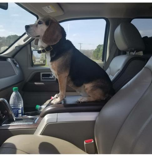 Lost Female Dog last seen Near land of promise road chesapeake 23322, Chesapeake, VA 23322