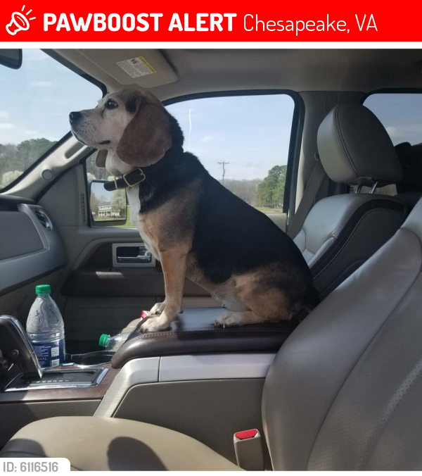 Lost Female Dog last seen Near land of promise road chesapeake 23322, Chesapeake, VA 23322