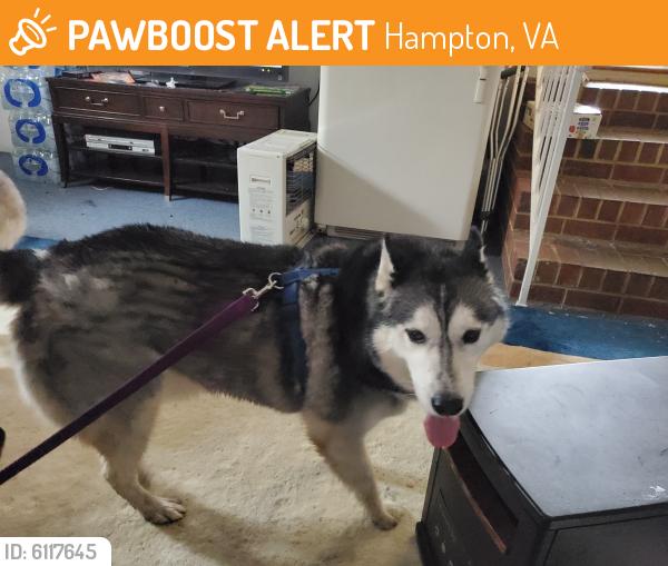 Found/Stray Male Dog last seen Hillside dr & joyens rd, Hampton, VA 23666