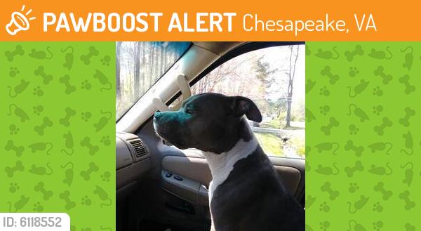 Found/Stray Unknown Dog last seen Washington Drive, Chesapeake, VA 23322
