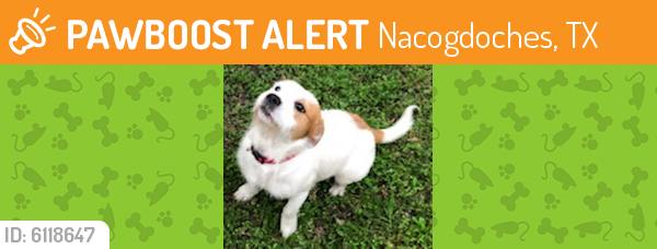 Found/Stray Male Dog last seen Woodland Hills Golf Club, Nacogdoches, TX 75964