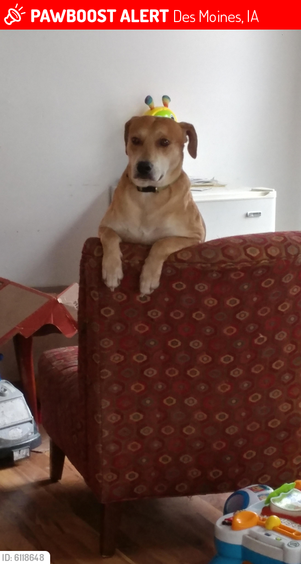 Lost Male Dog last seen Hull ave and york ave, Des Moines, IA 50309