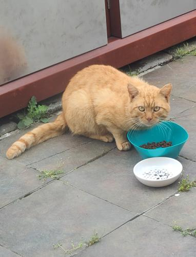 Found/Stray Male Cat last seen Buckner Farms, Virginia Beach, VA 23453
