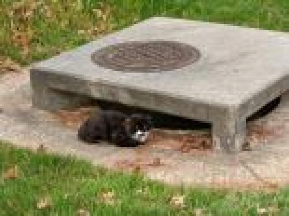 Shelter Stray Unknown Cat last seen , Centreville, VA 20120