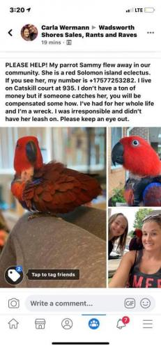 Lost Female Bird last seen Catskill Court, Virginia Beach, VA 23451