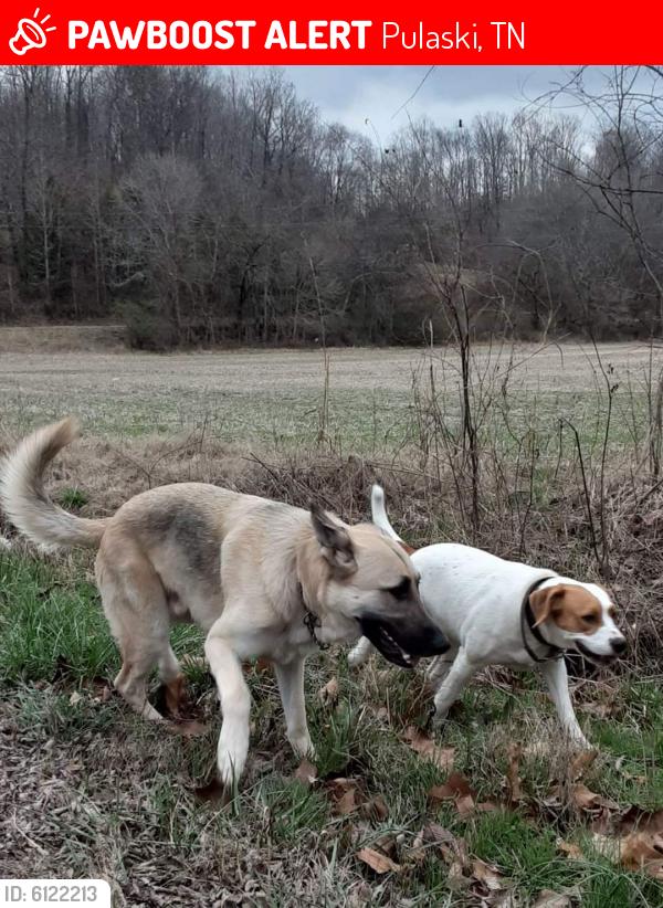 Lost Male Dog last seen Bottom of maxwell hill and pigeon roost, Pulaski, TN 38478