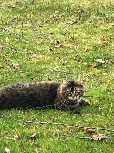 Found/Stray Female Cat last seen Stimson Rd and Coon Rd, Barberton, OH 44203