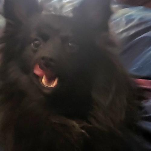 Lost Male Dog last seen Walnut Meadows, Oakley, CA 94561