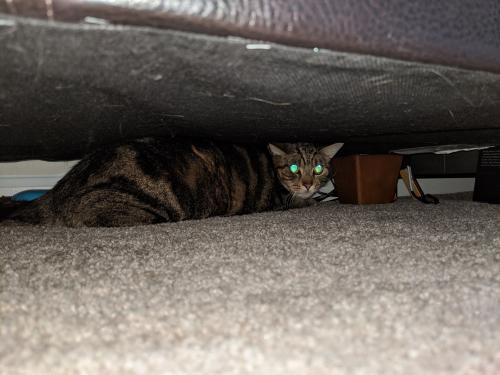 Found/Stray Unknown Cat last seen Abbott's Run Apartments. 5805 Woodlawn Gable Drive, Alexandria, VA 22309