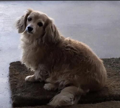 Lost Female Dog last seen South Links Circle, Suffolk, VA 23435