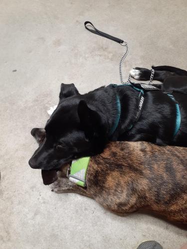 Lost Male Dog last seen Battery park road Chesapeake va by the circle, Chesapeake, VA 23323