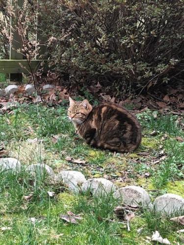 Lost Female Cat last seen Gate Dancer Lane, Boyds, MD 20841