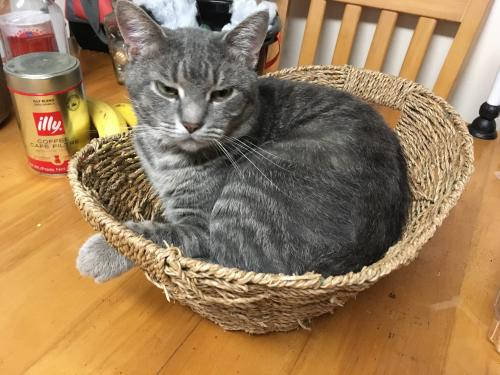Lost Male Cat last seen Brian Avenue and Clover, Virginia Beach, VA 23462