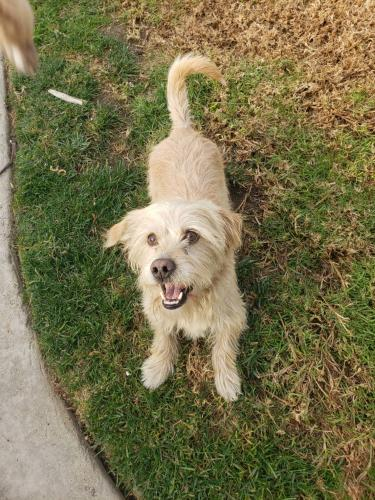 Lost Male Dog last seen Coolgrove Dr and Dos Rios Rd, Downey, CA 90241