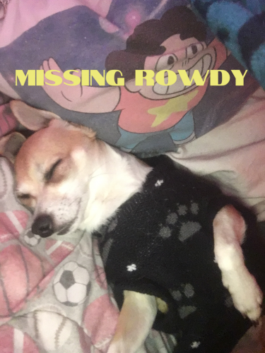 Lost Male Dog last seen 103rd & Central , Los Angeles, CA 90002