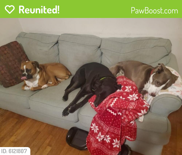 Reunited Female Dog last seen Wassergass/Easton Ave, Easton, PA 18042