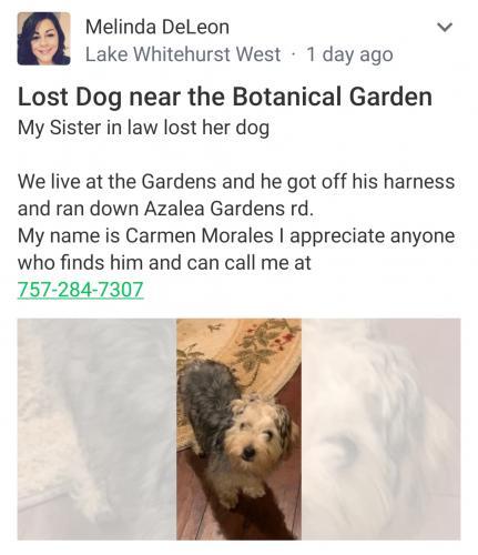 Lost Male Dog last seen Azalea Garden Road and Oleo Dr., Norfolk, VA 23513