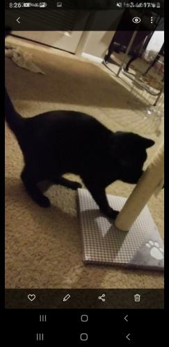 Found/Stray Male Cat last seen Near riverbend in the south clubhouse area, Virginia Beach, VA 23452