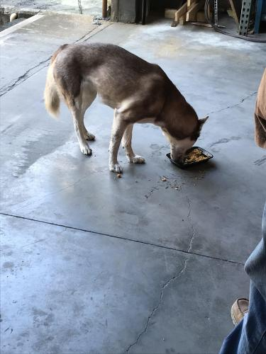 Found/Stray Female Dog last seen Morris Tile, Newport News, VA 23608
