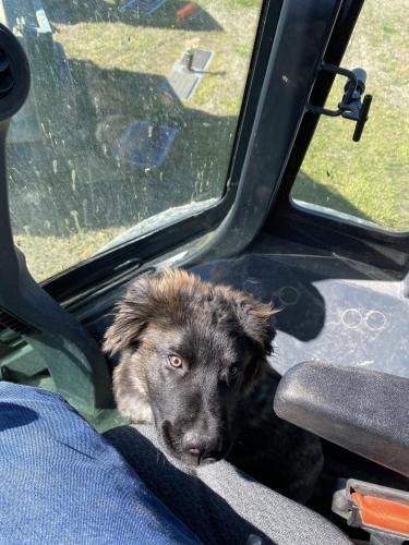 Found/Stray Unknown Dog last seen Meadowbrook Memorial Gardens, Suffolk, VA 23435