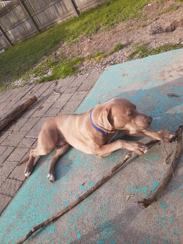 Lost Male Dog last seen ocean veiw area, Norfolk, VA 23503
