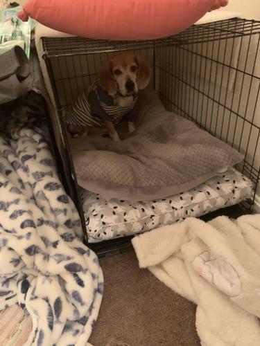 Lost Male Dog last seen Lebanon church rd and Yorktown rd, Newport News, VA 23603