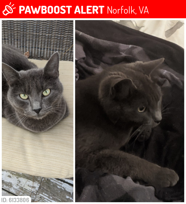 Lost Male Cat last seen D View and 1st View, Norfolk, VA 23503