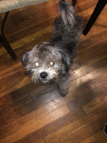 Lost Male Dog last seen Christopher shores Wickham ave Newport News va 23607 , Newport News, VA 23607