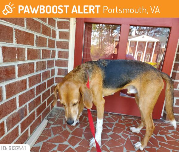 Found/Stray Male Dog last seen Shoreline and Glencive , Portsmouth, VA 23703