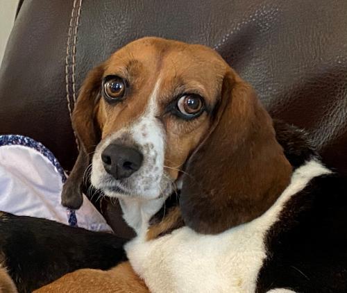 Lost Female Dog last seen Louisville Road, Louisville, TN 37777