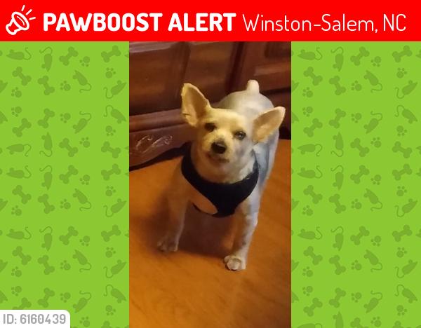 Lost Male Dog last seen Wynfield Crossing & Burke Mill rd, Winston-Salem, NC 27103