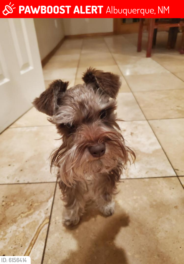 Lost Male Dog in Albuquerque, NM 87114 Named Tuck (ID ...