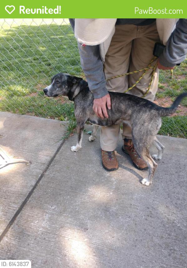 Reunited Female Dog in Greensboro, NC 27408 (ID: 6143837 ...