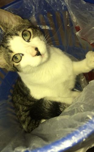 Lost Male Cat last seen Jackson , Appleton, WI 54915