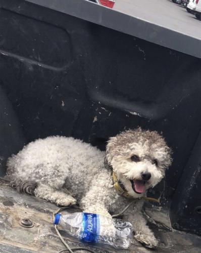Lost Male Dog last seen Wawona street, Manteca, CA 95337