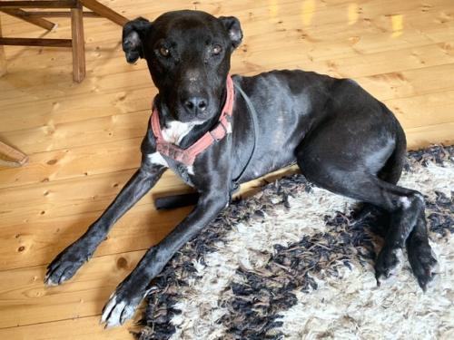 Found/Stray Male Dog last seen Ohia Ave. & 25th st, Eden Roc, HI 96771