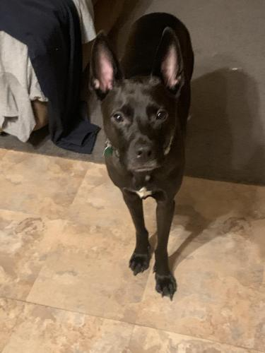 Lost Male Dog last seen Watt Rd, Knoxville, TN 37932