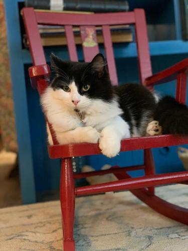 Lost Male Cat last seen Mountain Hwy & 235th St E Spanaway , Elk Plain, WA 98387