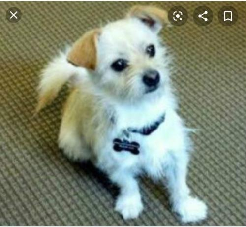 Lost Male Dog last seen Dollar general in central texas , Lufkin, TX 75904