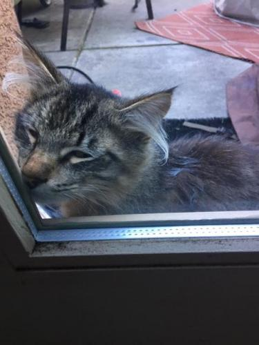 Found/Stray Male Cat last seen Near Tiara, Vallejo, CA 94591