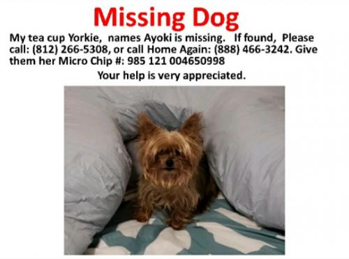 Lost Female Dog last seen Van Cortlandt Park Avenue and Louden Street, Yonkers, NY 10705