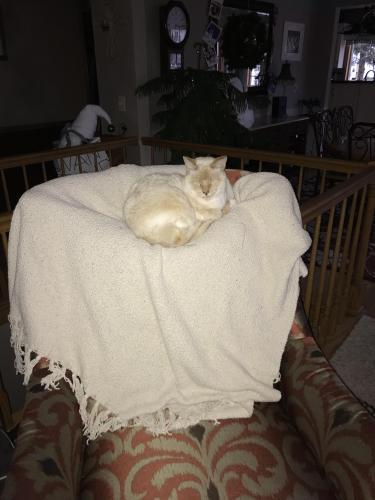 Lost Male Cat last seen Appleton post office, Appleton, WI 54911