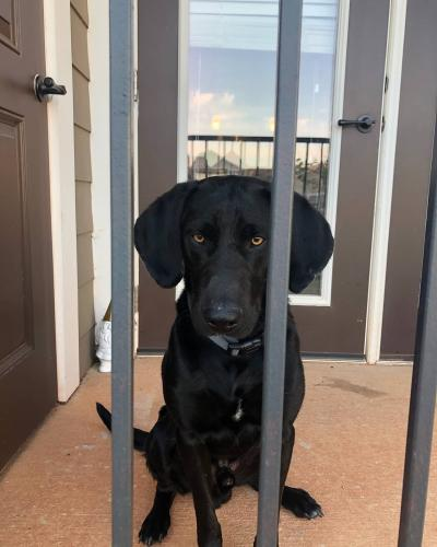 Lost & Found Dogs, Cats, And Pets In Oklahoma City, OK