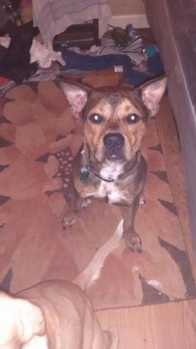 Lost Male Dog last seen Fox hill rd , Hampton, VA 23669
