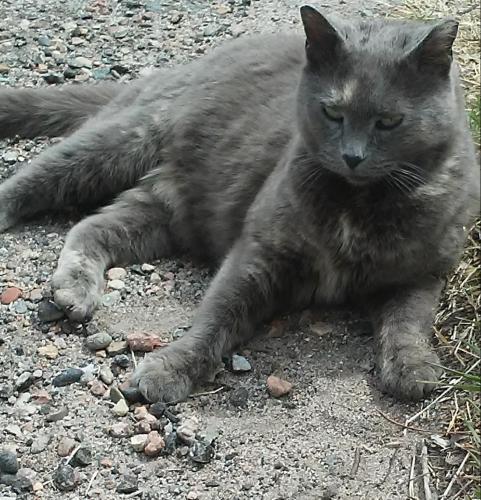 Lost Female Cat last seen 8th and Salem/Reading/Troy (EAST SIDE Pueblo), Pueblo, CO 81001