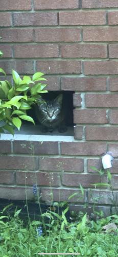 Lost Unknown Cat last seen Under my house :), Newport News, VA 23601