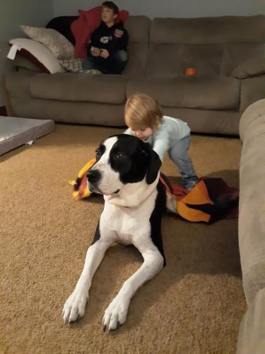 Lost Female Dog last seen Mount pleasant rd, Chesapeake, VA 23322