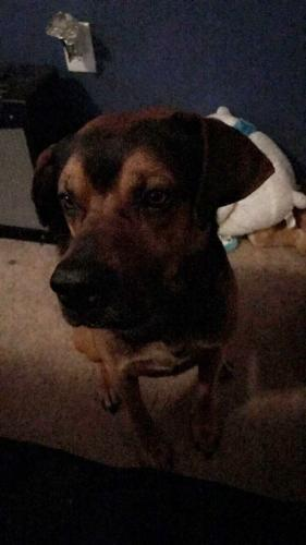 Lost Male Dog last seen Old buckroe road and Mallory , Hampton, VA 23663