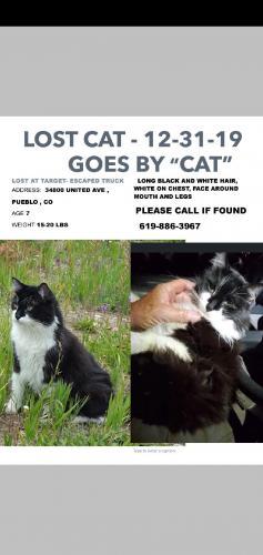 Lost Male Cat last seen Near E United Ave, Pueblo, CO 81001, Pueblo, CO 81001