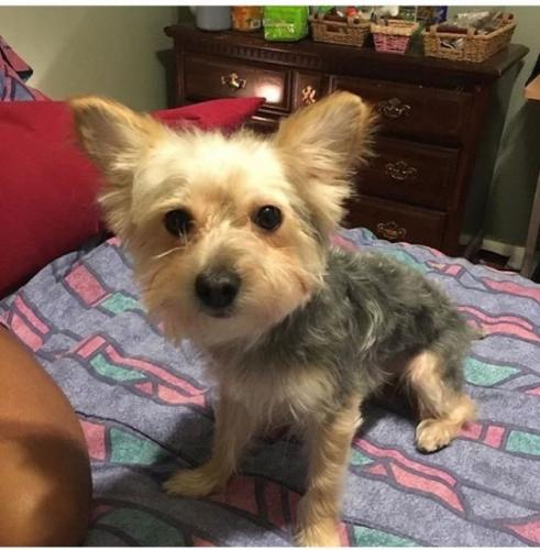 Lost Male Dog last seen Military Circle Mall, Norfolk, VA 23502